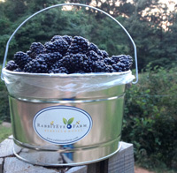 Blackberry Bucket