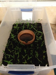 propagation box open