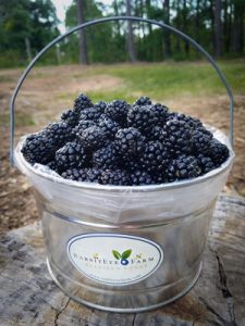 2016 Blackberries